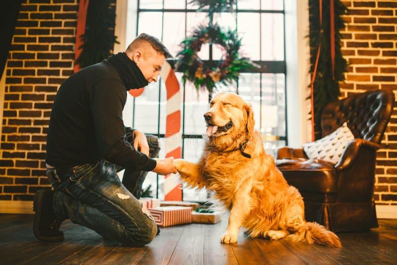 Φιλία του ατόμου και του σκυλιού Retriever της Pet χρυσό δασύτριχο σκυλί του Λαμπραντόρ φυλής Ένα άτομο εκπαιδεύει, διδάσκει ένα  στοκ φωτογραφίες με δικαίωμα ελεύθερης χρήσης