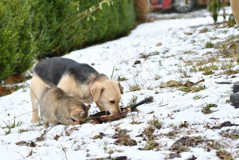 Φιλική κατανάλωση γατών και σκυλιών κοτόπουλου κατοικίδιων ζώων από κοινού στοκ φωτογραφία με δικαίωμα ελεύθερης χρήσης