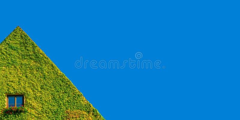 Φιλικό προς το περιβάλλον σπίτι με το μόνο παράθυρο στις πράσινες εγκαταστάσεις κισσών στην ηλιόλουστη ημέρα και το μπλε ουρανό στοκ φωτογραφίες
