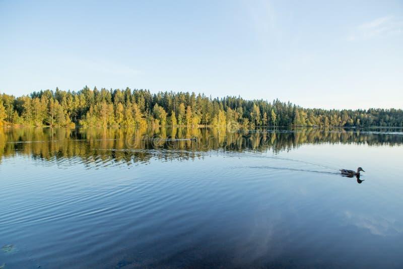 Φινλανδικά μπλε λίμνη και δάσος στοκ φωτογραφίες