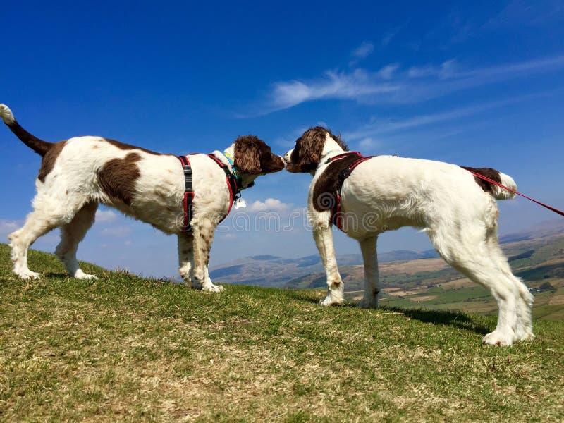 φιλία σκυλιών στοκ εικόνες με δικαίωμα ελεύθερης χρήσης
