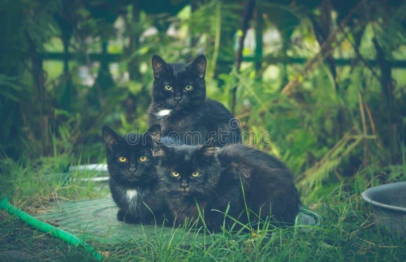 Φιλική αιλουροειδής οικογένεια στοκ φωτογραφία με δικαίωμα ελεύθερης χρήσης