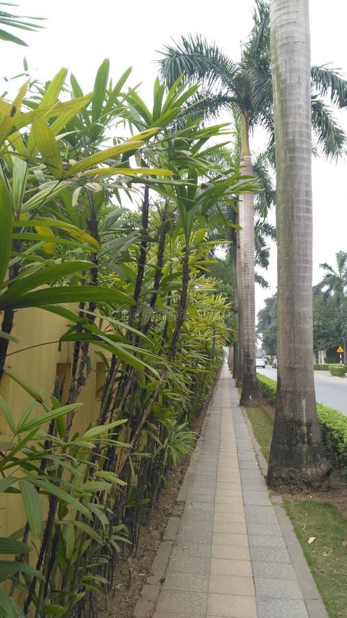 Φιλικό προς το περιβάλλον σύνθετο Ανόι Βιετνάμ στοκ εικόνα