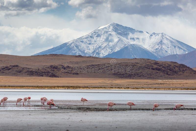 Φλαμίγκο και θυελλώδης καιρός στη Βολιβία στοκ φωτογραφία με δικαίωμα ελεύθερης χρήσης