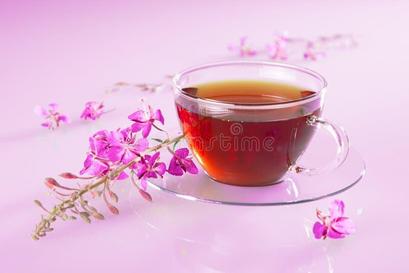 Φλιτζάνι με τσάι από βότανα και φρέσκα λουλούδια στοκ εικόνα με δικαίωμα ελεύθερης χρήσης