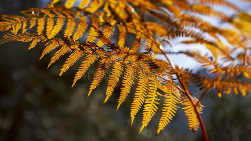 Φλογερά φύλλα φτερών στο backlight σε ένα θολωμένο σκοτεινό υπόβαθρο στοκ φωτογραφίες με δικαίωμα ελεύθερης χρήσης
