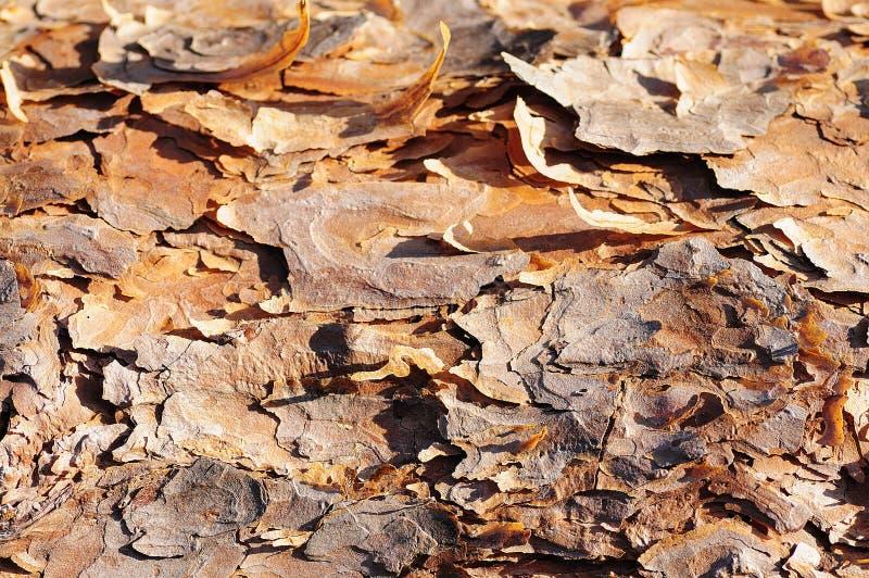 Φλοιός δέντρων στον ήλιο στοκ φωτογραφία με δικαίωμα ελεύθερης χρήσης