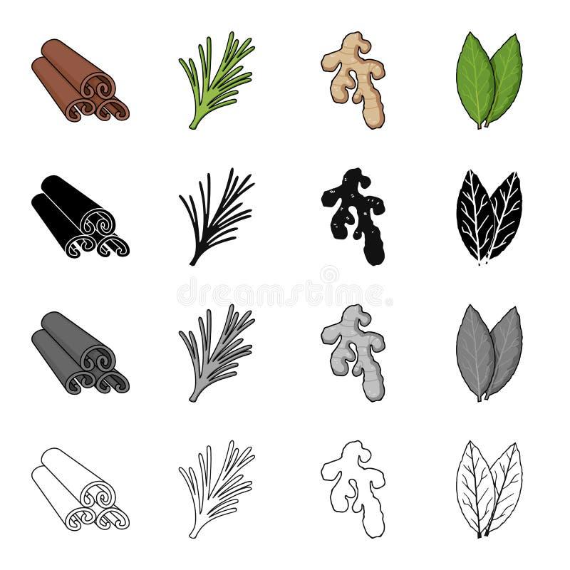 Φλοιός κανέλας, πικάντικο δεντρολίβανο, ρίζα πιπεροριζών, φύλλο κόλπων Τα καρυκεύματα καθορισμένα τα εικονίδια συλλογής στη μαύρη διανυσματική απεικόνιση