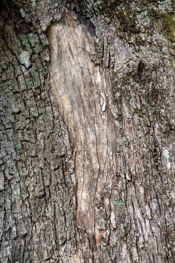 Φλοιός της ελιάς στοκ φωτογραφία με δικαίωμα ελεύθερης χρήσης