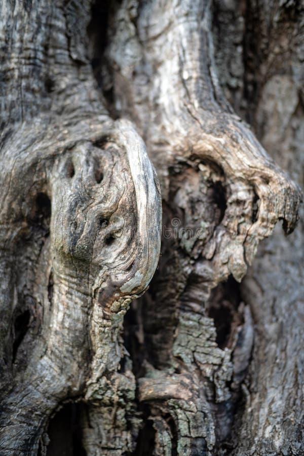 Φλοιός της ελιάς στοκ φωτογραφίες με δικαίωμα ελεύθερης χρήσης
