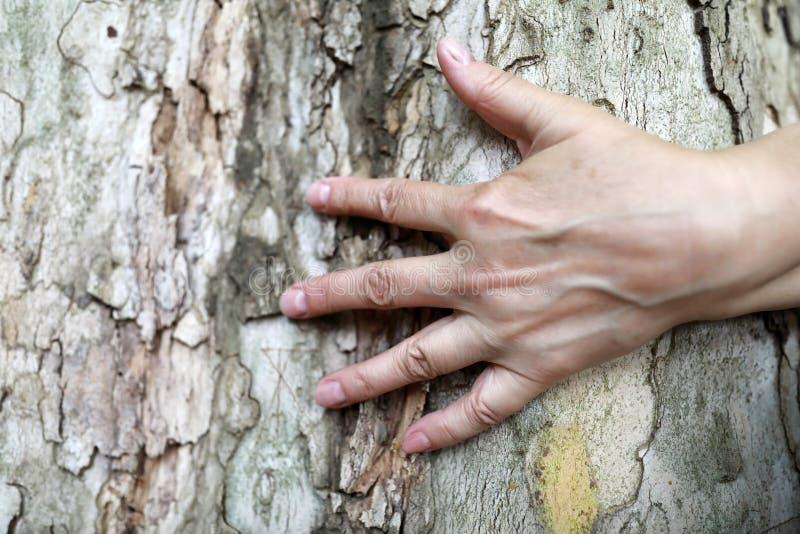 Φοίνικας γυναικών και φλοιός δέντρων στοκ φωτογραφία