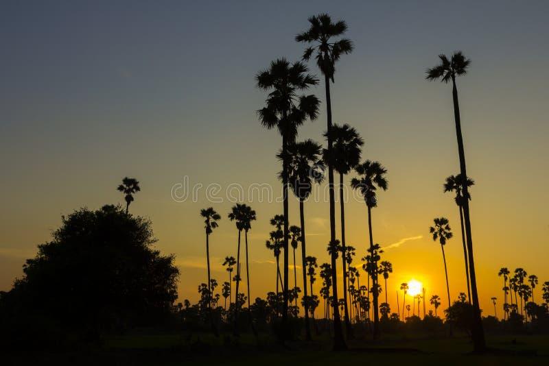 Φοίνικας ζάχαρης σκιαγραφιών στο ηλιοβασίλεμα στοκ εικόνες