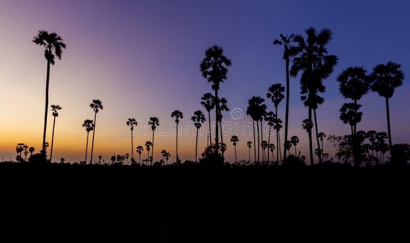 Φοίνικας ζάχαρης σκιαγραφιών στο λυκόφως ηλιοβασιλέματος στοκ φωτογραφίες