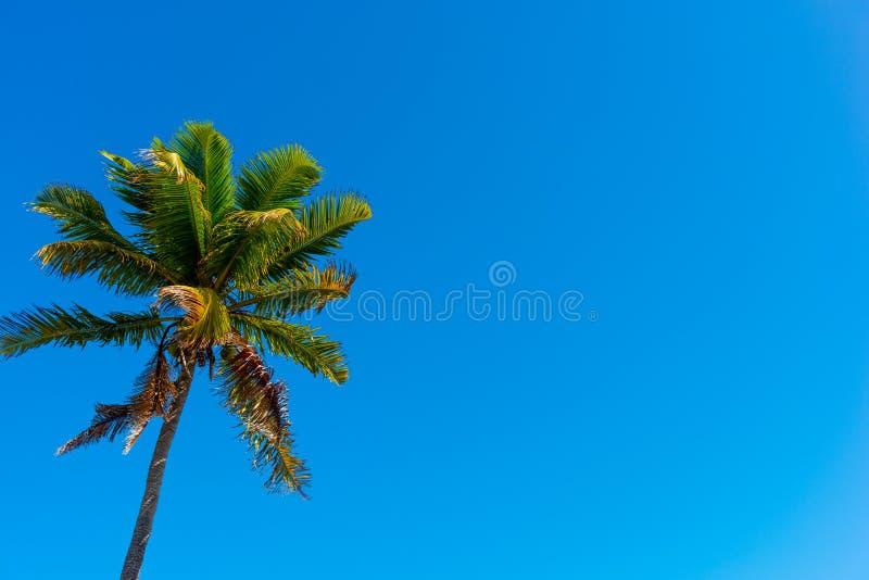 Φοίνικας κάτω από έναν μπλε ουρανό στη Key West στοκ φωτογραφίες με δικαίωμα ελεύθερης χρήσης