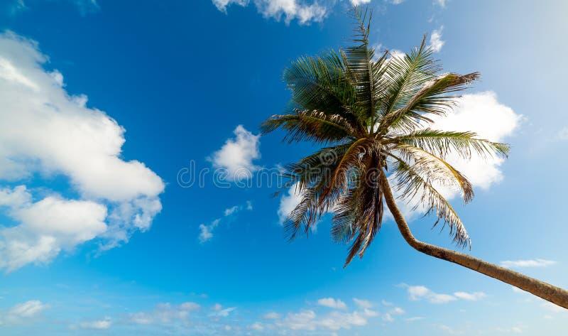 Φοίνικας κάτω από έναν νεφελώδη ουρανό στη Γουαδελούπη στοκ φωτογραφία με δικαίωμα ελεύθερης χρήσης