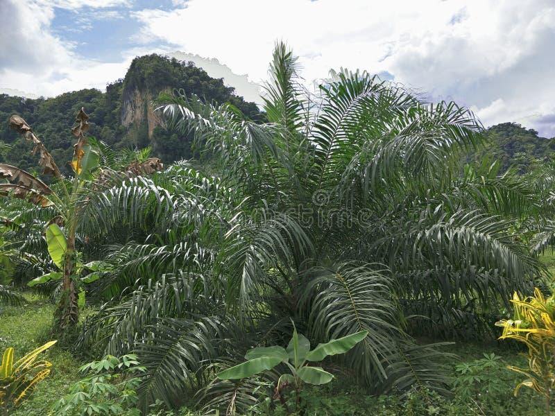 φοίνικας κήπων στοκ φωτογραφία με δικαίωμα ελεύθερης χρήσης