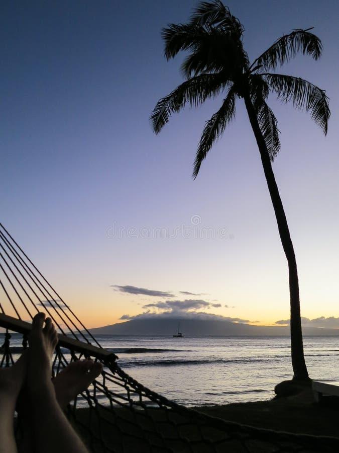 Φοίνικας και αιώρα στην παραλία στο ηλιοβασίλεμα στοκ φωτογραφία