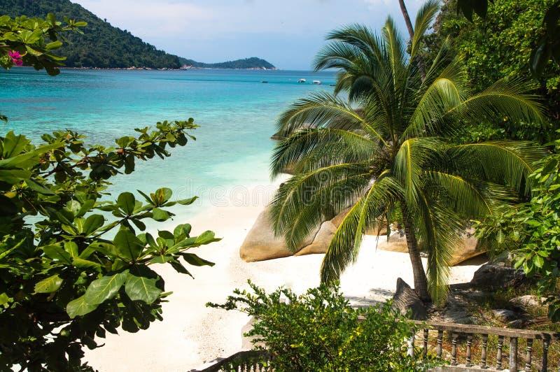 Φοίνικας και βράχοι στην άσπρη παραλία άμμου σε Pulau Perhentian, Mal στοκ φωτογραφίες