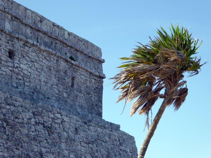 Φοίνικας και των Μάγια ναός σε Tulum στοκ εικόνες