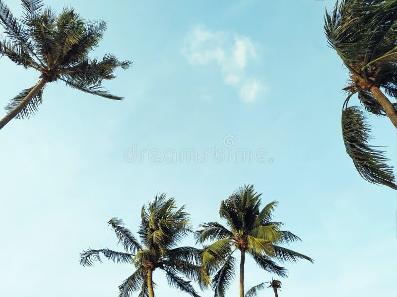 Φοίνικας καρύδων με τον ηλιόλουστο ουρανό στοκ φωτογραφία