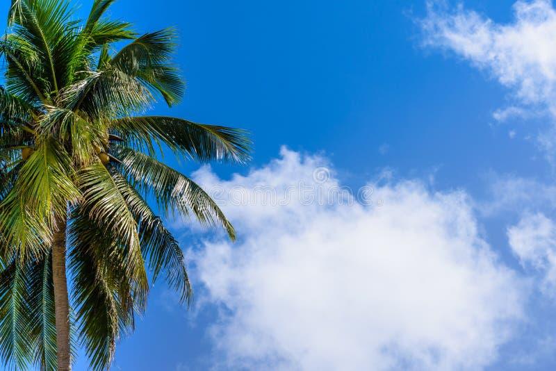 Φοίνικας καρύδων με το μπλε ουρανό και το σύννεφο Όμορφο τροπικό υπόβαθρο στοκ εικόνες