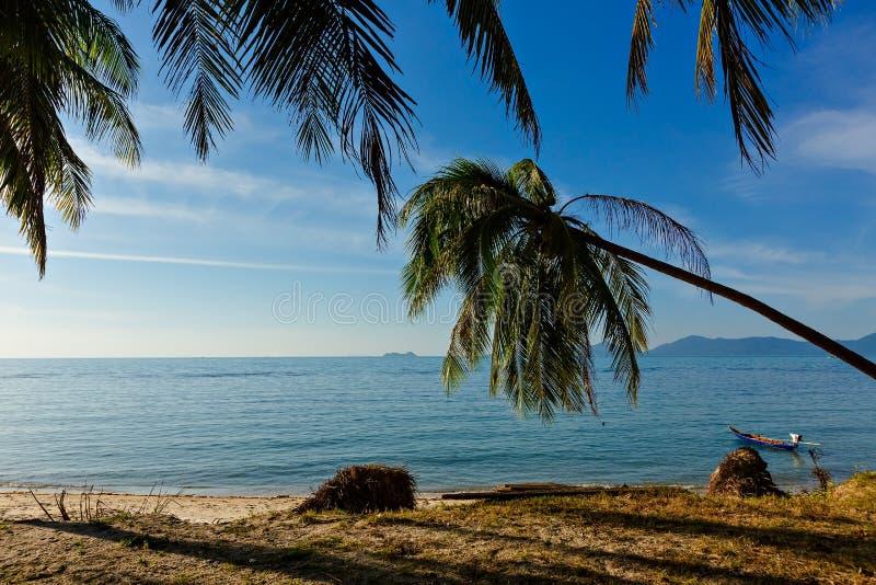 Φοίνικας καρύδων στην άσπρη αμμώδη παραλία o Όμορφη άποψη της ήρεμης καθαρής ηλιόλουστης παραλίας στοκ φωτογραφία με δικαίωμα ελεύθερης χρήσης