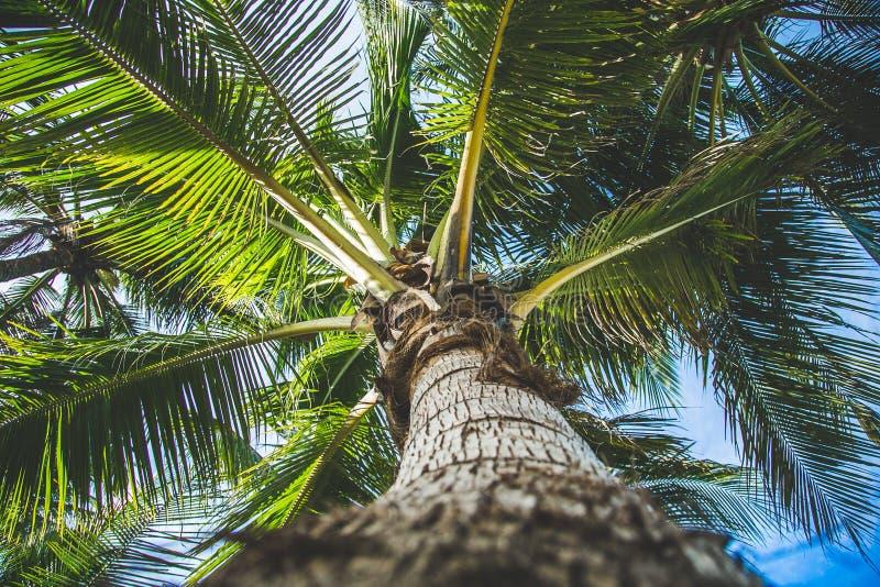Φοίνικας καρύδων στο νησί στοκ φωτογραφία