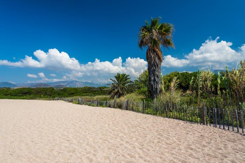 Φοίνικας κοντά στην όμορφη παραλία Ιδανικές διακοπές για τα βουνά τουριστών στο υπόβαθρο, μπλε ουρανός, άσπρα σύννεφα Τροπικός πα στοκ φωτογραφία με δικαίωμα ελεύθερης χρήσης