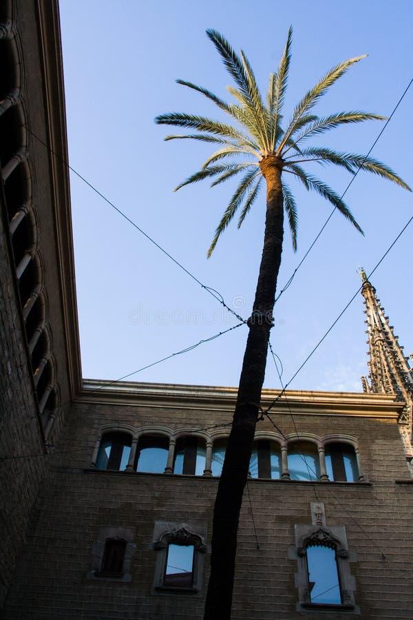 Φοίνικας μεταξύ των κτηρίων στοκ φωτογραφία με δικαίωμα ελεύθερης χρήσης