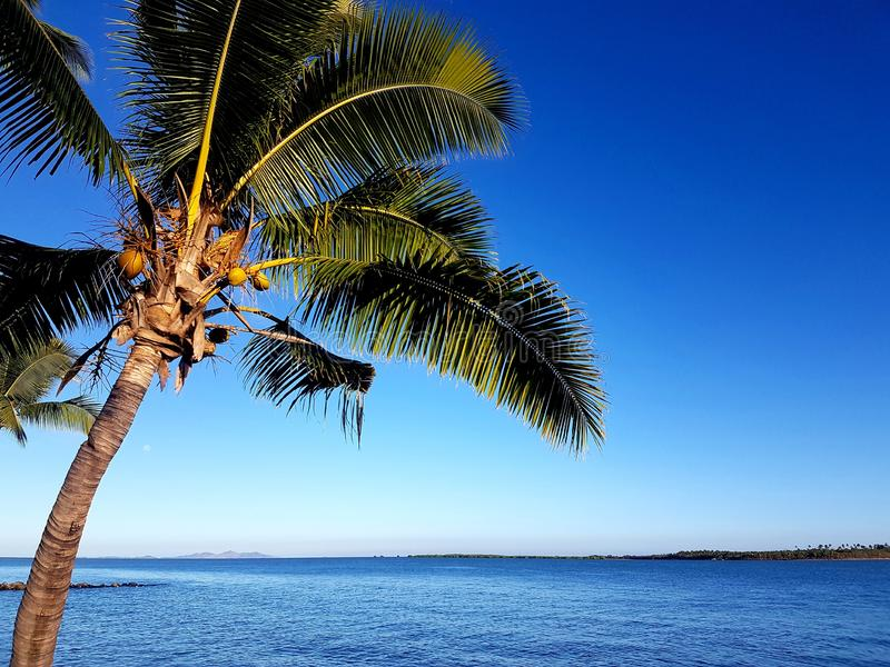 Φοίνικας νησιών Denaru στοκ εικόνες