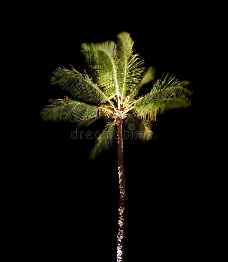 φοίνικας νύχτας τροπικός στοκ φωτογραφίες με δικαίωμα ελεύθερης χρήσης