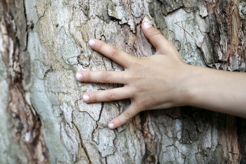 Φοίνικας παιδιών και φλοιός δέντρων στοκ φωτογραφία με δικαίωμα ελεύθερης χρήσης