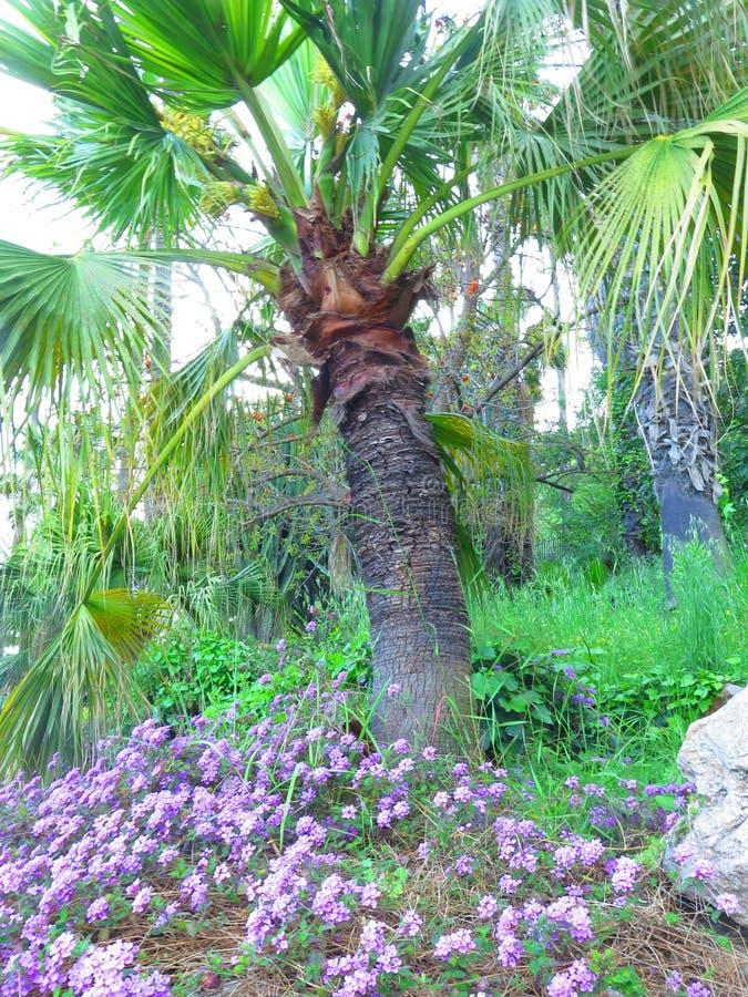 Φοίνικας που περιβάλλεται από τα λουλούδια στοκ εικόνες