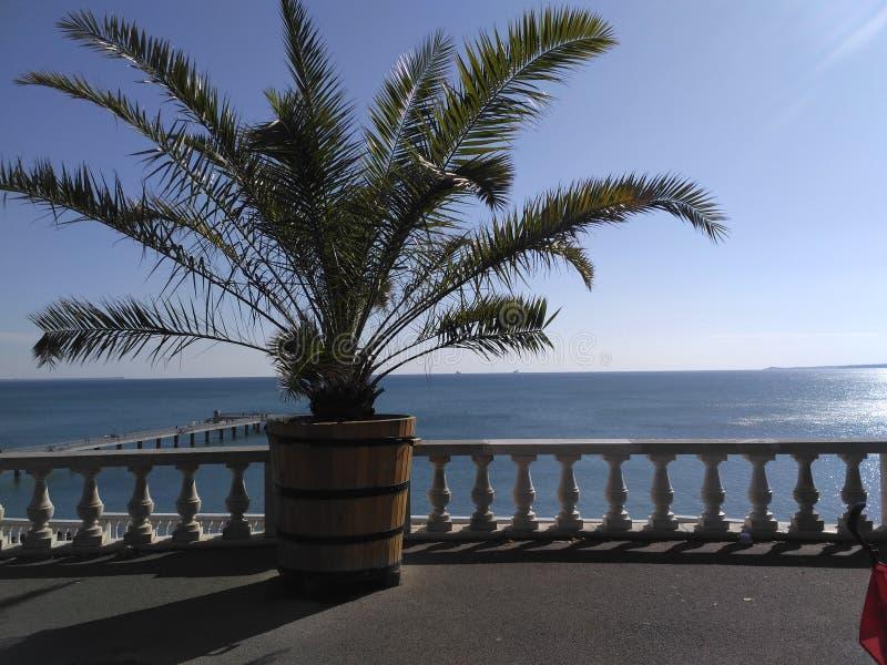 Φοίνικας σε Μαύρη Θάλασσα στοκ φωτογραφία με δικαίωμα ελεύθερης χρήσης