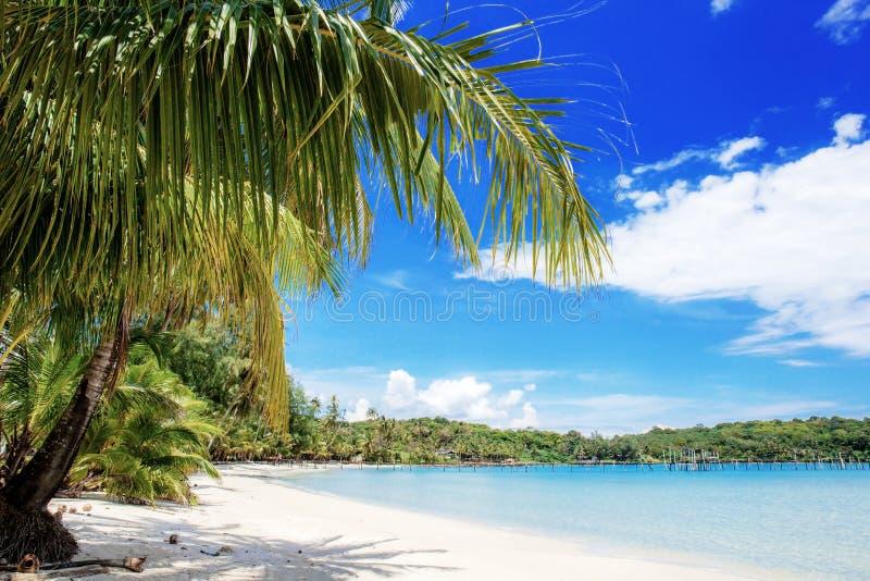 Φοίνικας στην παραλία στο μπλε ουρανό στοκ εικόνες με δικαίωμα ελεύθερης χρήσης
