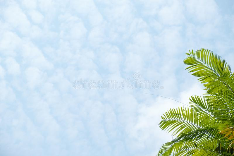 Φοίνικας στο υπόβαθρο ουρανού Φύλλα φοινικών πέρα από το μπλε ουρανό στοκ εικόνες