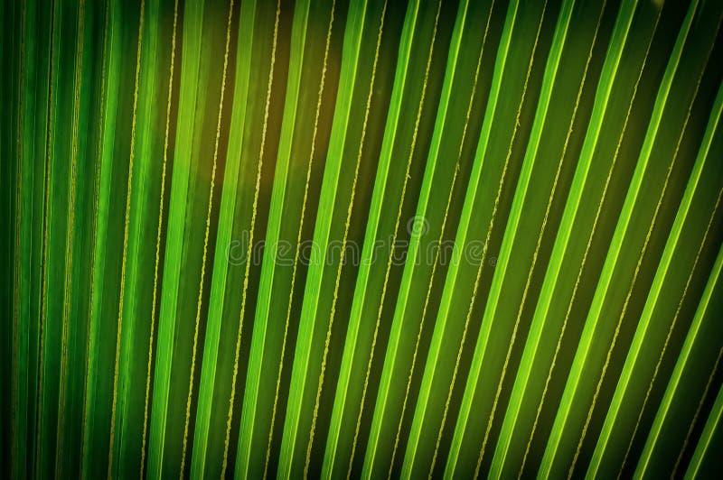 φοίνικας φύλλων ανασκόπη&sigma Στοκ Φωτογραφία