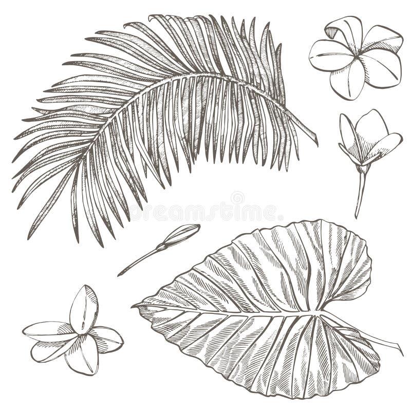 φοίνικας φύλλων τροπικός επίσης corel σύρετε το διάνυσμα απεικόνισης Χαραγμένα φύλλα ζουγκλών απεικόνιση αποθεμάτων