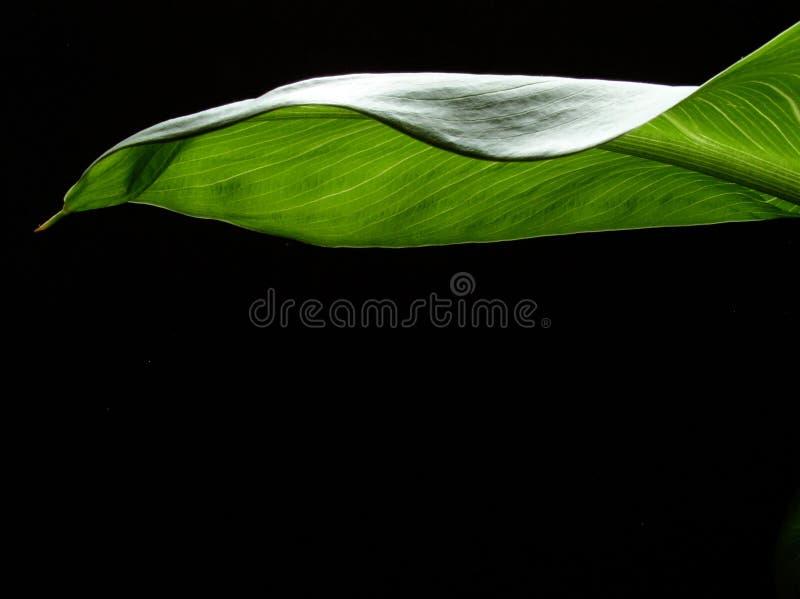 Download φοίνικας φύλλων στοκ εικόνες. εικόνα από φυτό, δέντρο, αποσυνθέστε - 525516