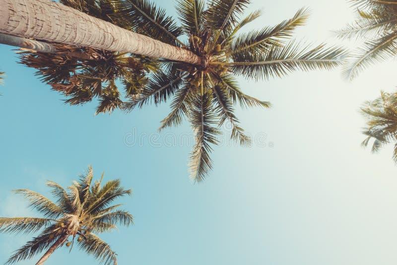 Φοίνικας Oconut στον τροπικό μπλε ουρανό παραλιών με το φως του ήλιου στοκ εικόνα με δικαίωμα ελεύθερης χρήσης