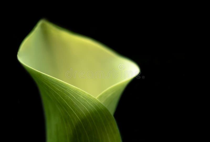 Φοίνικας Sothern Εκλεκτική εστίαση στοκ φωτογραφία με δικαίωμα ελεύθερης χρήσης
