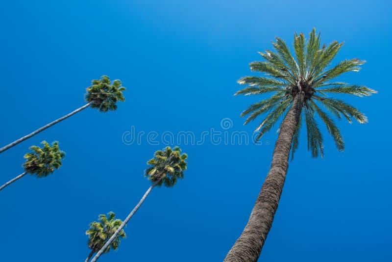 Φοίνικες ενάντια σε έναν βαθύ μπλε ουρανό στοκ εικόνες