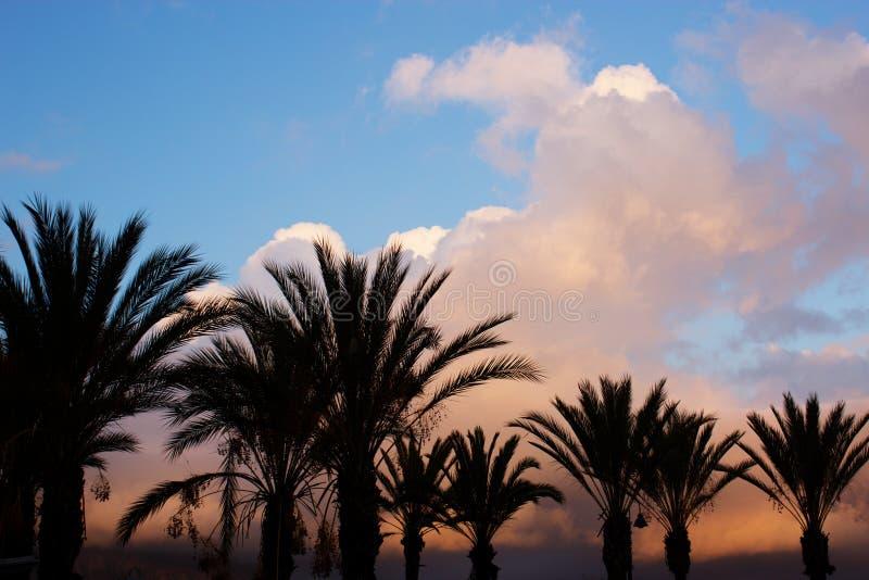 Φοίνικες ενάντια στον ουρανό στο ηλιοβασίλεμα στοκ φωτογραφίες με δικαίωμα ελεύθερης χρήσης