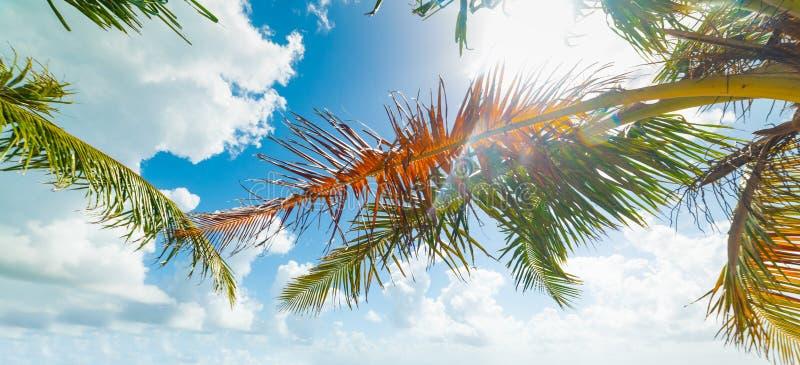 Φοίνικες κάτω από έναν λάμποντας ήλιο στις Καραϊβικές Θάλασσες στοκ φωτογραφία με δικαίωμα ελεύθερης χρήσης