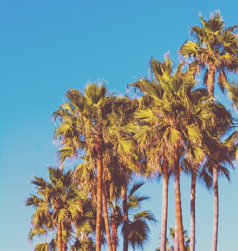 Φοίνικες κάτω από έναν μπλε ουρανό στον εκλεκτής ποιότητας τόνο στοκ φωτογραφία με δικαίωμα ελεύθερης χρήσης