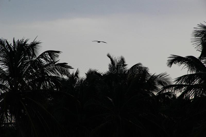 Φοίνικες και άσπρη αμμώδης παραλία στο ηλιοβασίλεμα σε Caribbeans ελεύθερη απεικόνιση δικαιώματος