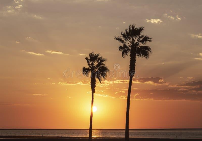 Φοίνικες και ζωηρόχρωμος ουρανός με το όμορφο ηλιοβασίλεμα στοκ φωτογραφίες με δικαίωμα ελεύθερης χρήσης
