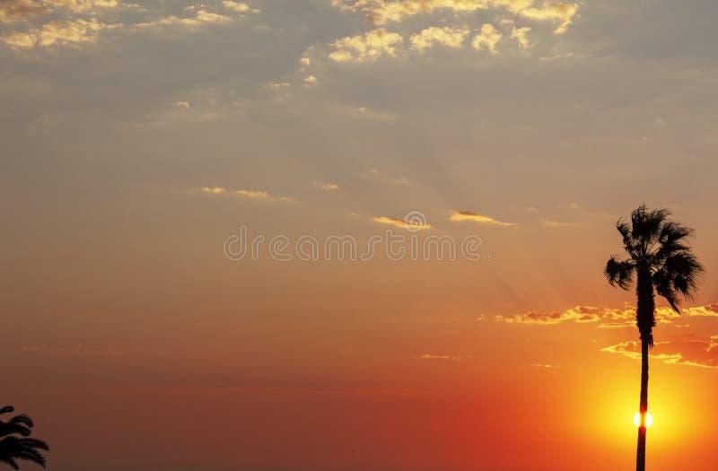 Φοίνικες και ζωηρόχρωμος ουρανός με το όμορφο ηλιοβασίλεμα στοκ φωτογραφία με δικαίωμα ελεύθερης χρήσης