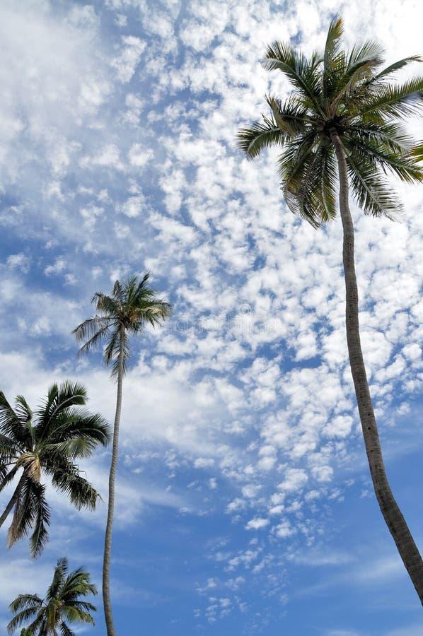 Φοίνικες και φωτεινός μπλε ουρανός στοκ εικόνες