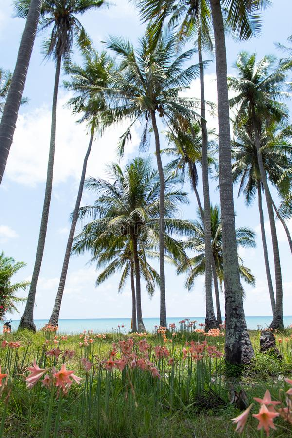 φοίνικες καρύδων και τέσσερις κατευθύνσεις στην παραλία στοκ φωτογραφίες